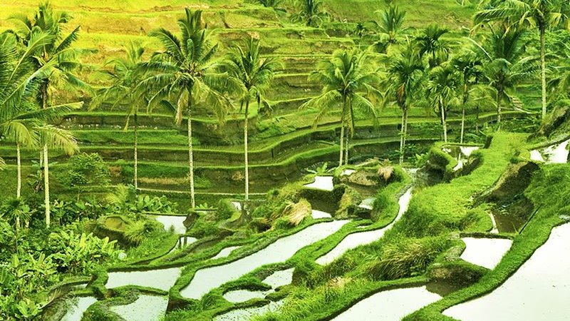 Top 5 Things to Do in Ubud, Bali 13